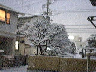snow_20060121_5.jpg