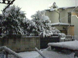 snow_20060121_6.jpg